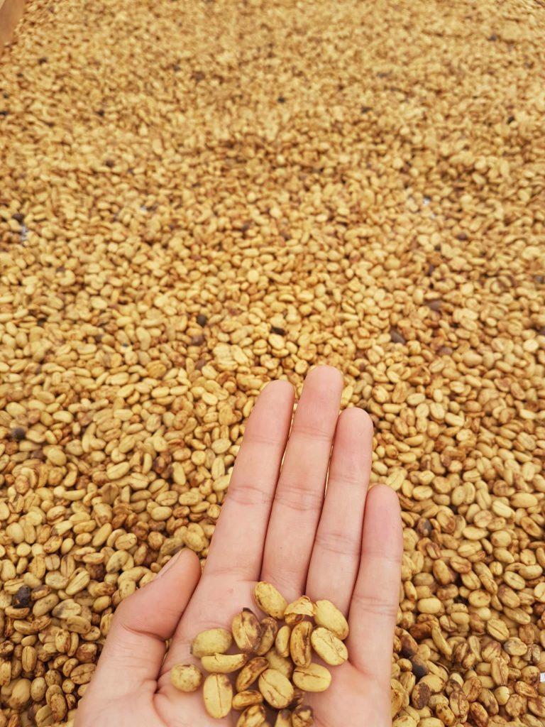 Cà phê được chế biến Honey (White Honey)